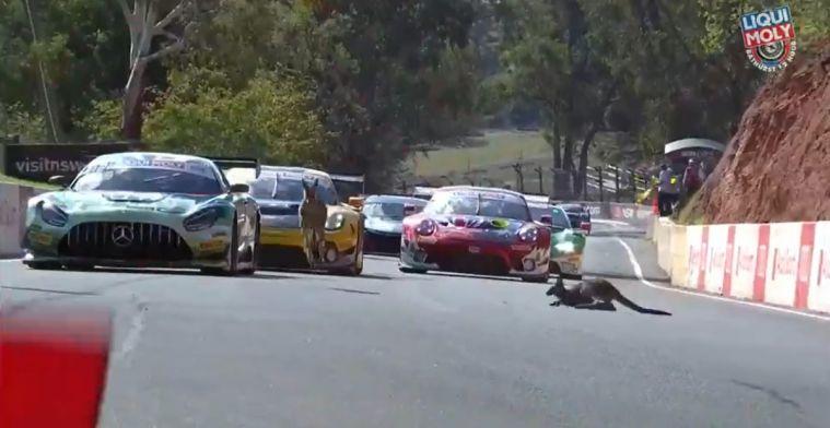 Zware crashes en kangoeroes op de baan bij kwalificatie 12 uur van Bathurst