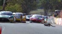 Image: Kangaroos on the track and massive crashes at Bathurst 12 Hour qualifying!